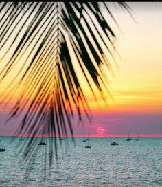 Perth, Brisbane, Melbourne, Beautiful Places, Beautiful Pictures, Palm Trees Beach, Exotic Beaches, Destinations, Ocean Scenes