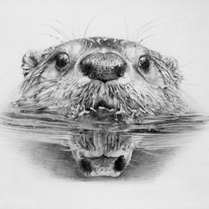 """Finished at last.... #otters #otter #riverotter #northamericanotter #pencil #potd #pencilart #pencilartist #pencildrawing #realistic #art #artwork…"""