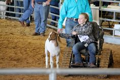 Grace has Spina Bifida and she uses her Action Trac chair to show a goat in the Madison County Fair