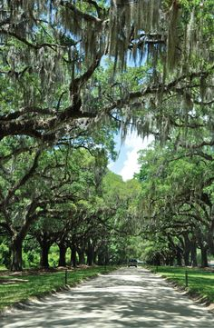 under the oaks at boone hall plantation.