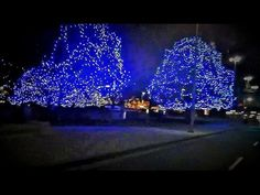 In the absence if snow having yet arrived in Ottawa. Canada, festive outdoor lighting becomes the next best thing !