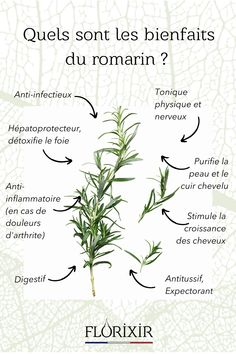Sante Bio, Bach Flowers, Herb Seeds, Body Is A Temple, Healing Herbs, Health Matters, Good To Know, Natural Health, Aromatherapy