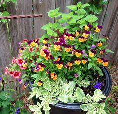 Container of flowers for the garden
