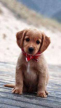 Awwww! So cute