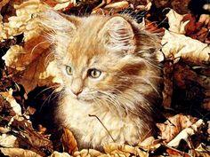 4 Autumn Halloween Cat Kitten Cats Kittens Greeting Notecards/ Envelopes Set. $6.99, via Etsy.