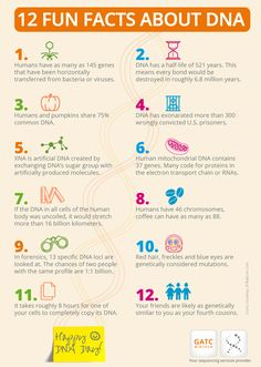 67 best dna images on pinterest life science school and science infographic on 12 dna fun facts malvernweather Image collections