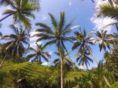 """187 Likes, 8 Comments - Aivan Vo (@aikkuvo) on Instagram: """"sunday mood 🌞  #ubud #ricefield #balipedia #bali #ubudricefields #riceislife #indonesia"""""""