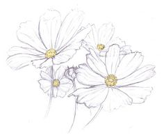 This Sketch of Daisy decal has a tone of unfinished nostalgia that will always bring you back to a beautiful spring flower memory! Description from pinterest.com. I searched for this on bing.com/images