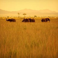 African Safari dream vacation