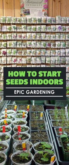 Learn how to start seeds indoors and get a head start on the growing season&; Learn how to start seeds indoors and get a head start on the growing season&; Hydroponic Growing, Hydroponic Gardening, Hydroponics, Hydroponic Vegetables, Gardening Vegetables, Indoor Vegetable Gardening, Organic Gardening, Gardening Tips, Flower Gardening