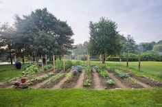 Vegetable Gardening Newbie? This Guide Has Tons of Information: Where Should You Put Your Vegetable Garden?