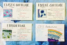 """bestapologies: """" just wanted to post some of my notes from human biology that i'm really proud of - i've finished school now but i can't bring myself to chuck these babies out """" Pretty Notes, Good Notes, Beautiful Notes, Chemistry Notes, Science Notes, School Motivation, Study Motivation, Study Skills, Study Tips"""