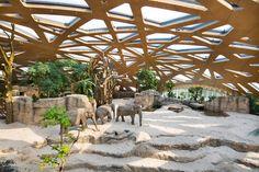 markus schietsch architekten caps elephant sanctuary with timber geodesic roof in zurich
