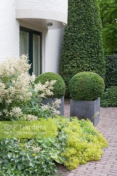Entrance, containers with Buxus sempervirens balls.