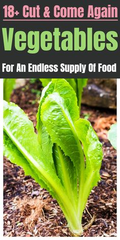 Cut and come again vegetables for your perennial garden. Best Picture For fake Plants For Your Long Blooming Perennials, Hardy Perennials, Flowers Perennials, Perennial Vegetables, Planting Vegetables, Growing Vegetables, Vegetable Gardening, Container Plants, Container Gardening