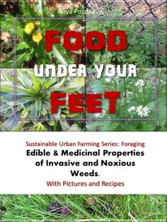 FOOD under your FEET - Food under your Feet. Sustainable Urban Farming Series: ForagingEdible & Medicinal Properties of Invasive and Noxious Weeds.With Pictures and Recipes. by Anya Pozdeeva, VIFarms.com