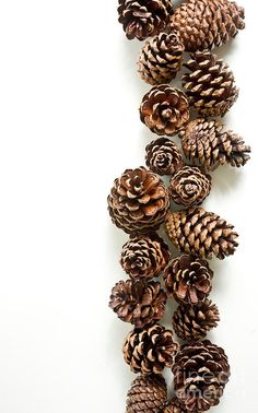 Fall Texture: Pinecones