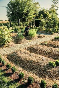 An example of a garden working with raised beds, mulching, and symmetry -- common practices in permaculture gardening.