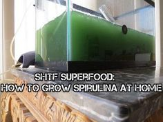 SHTF Superfood: How To Grow Spirulina At Home - SHTF Preparedness
