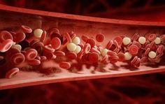 L'alimentazione è molto importante per poter pulire le arterie e mantenerle in salute in modo sano
