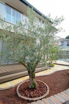 NH邸 静岡 | 施工実績|厳選した大きいオリーブの木の販売 | Exterior Olive