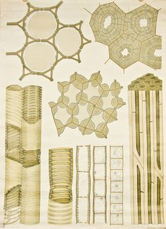 Plant cell membranes, drawn in 1929 by Frederik Elfving, Professor of Botany at the University of Helsinki