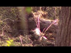 Sasquatch Mom and Dad and Baby - YouTube