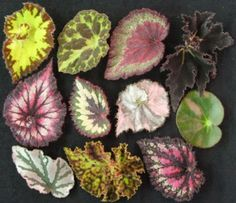 begonia leaves are fun and interesting.  Lots of interesting botanical items that are out of the ordinary.  Pair this with your pops of color for an artsy feel