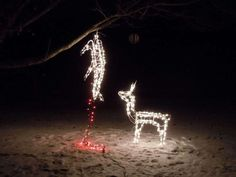 10 Funny Redneck Christmas Decorations For Hunters in measurements 1024 X 768 Redneck Christmas Lightsredneck Christmas Lights - Even the Christmas tree Redneck Christmas, Christmas Humor, Merry Christmas, Dark Christmas, Christmas Stuff, Christmas Garden, Christmas Time, Christmas Thoughts, Christmas Truck