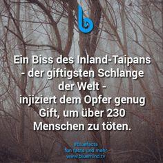 #bluefacts #fakten #wissen #zitat #quote #weisheit #spruch