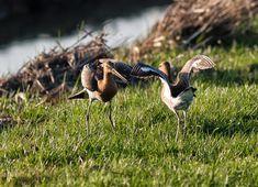 Dieren: Leuke vogels