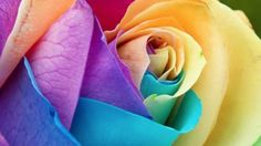 Las flores, que son las reinas del color, también visten este año del WorlPride Madrid 2017 los colores de la bandera del arcoíris para sumarse a la gran fiesta de la diversidad.Junto a las tradi...