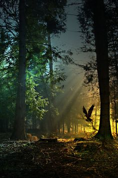 magicalnaturetour:    Guardian To The Golden Forest by *Stroody :)