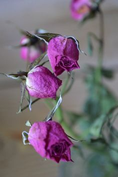 How to: Dry Flowers (and what to do with them)