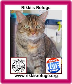 6/5/15 - Please VOTE & SHARE for RIKKI'S REFUGE in the Animal Rescue Site SHELTER CHALLENGE every day! Thank you! Vote here: http://www.shelterchallenge.com/web/charityusa/shelter-details?userId=53992&nomineeId=17448