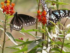 Steps to Building a Butterfly Garden | eHow UK