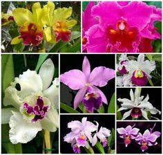 Orquideas de Venezuela Flora, Pure Beauty, Tropical Flowers, South America, Orchids, Trees, Wallpapers, Pure Products, Tattoo