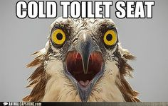 Cold toilets seats are for the birds!  Or not.