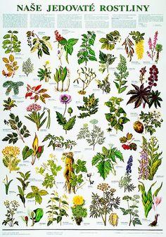 Naše jedovaté rostliny - nástěnná tabule ( 67x96 cm ) | ALBRA - Prodej a…