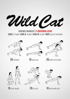 Wild Cat Workout - Concentration Mid and Lower Body - Difficulty 3 - Suitable for Beginners