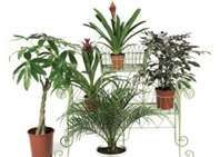 """""""Indoor Plants Clean the Air Naturally""""   indoor air quality and  how it affects our health  some simple solutions that can help improve the air we breath such as plants.. #Allergies, #asthma are affected by #pollutants. READ MORE @ www.organic4greenlivings.com"""
