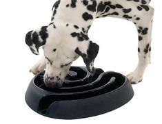 Foobler Puzzle Timed Dog BallFoobler is an automatic self-reloading puzzle feeder for dogs with 6 timer activated food pods. Fun Mind Games for Your Dog Fun Mind Games, Baby Dogs, Dogs And Puppies, Dog Doctor, Dog Puzzles, Puzzle Toys, Pet Boutique, Cool Inventions, Dog Paws