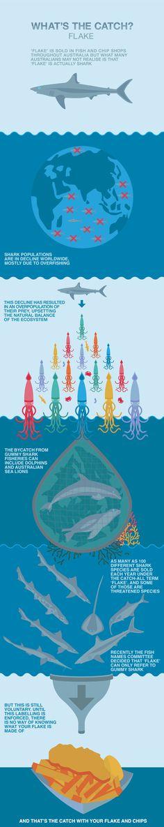 Shark sustainability #Whatsthecatch #shark #ProjectAWARE