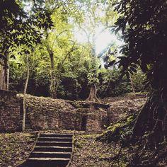 Magic Jungle -°-  Mexico