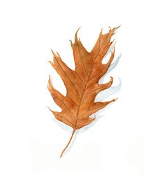 I love the autumn season. So many beautiful colors everywhere. I picked up this oak leaf on a walk and then brought it home to paint. I love its warm tones and its spiky, curly tips. Leaf Leaves (paintings, wc autumn leaves)