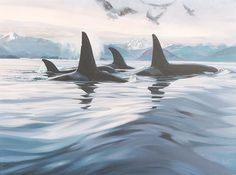 #Serrurier #Plaisir http://serrurierplaisir.lartisanpascher.com/ Whales in Howe Sound