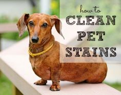 How to clean pet stains like poop and vomit from HousewifeHowTos.com