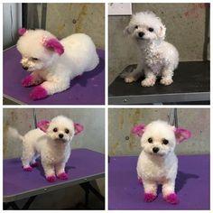 WEBSTA @ jazzypawzbyandrea - PARIS 🐶💕🐾 #whereyourpetistreatedlikefamily #dogsofinsta #pink #petdye #atlantadogs #dogsofinstagram #petstylist