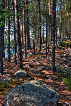 Path at Petkeljärvi national park, Finland by Digimikko