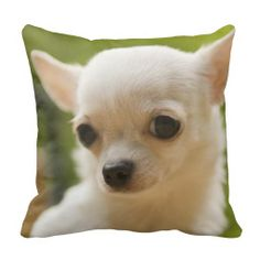 >>>Smart Deals for          Cute Chihuhua Puppy Throw Pillows           Cute Chihuhua Puppy Throw Pillows Yes I can say you are on right site we just collected best shopping store that haveThis Deals          Cute Chihuhua Puppy Throw Pillows Review from Associated Store with this Deal...Cleck Hot Deals >>> http://www.zazzle.com/cute_chihuhua_puppy_throw_pillows-189248780592105296?rf=238627982471231924&zbar=1&tc=terrest